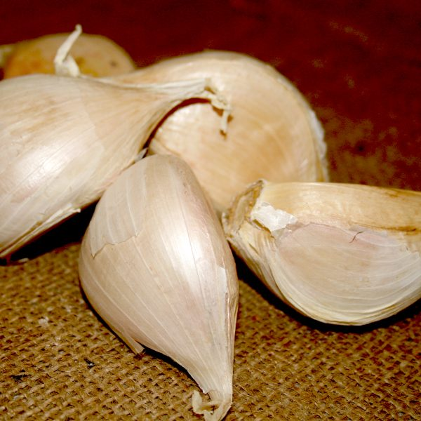 Organic Elephant Garlic Bulbs & Seed Garlic