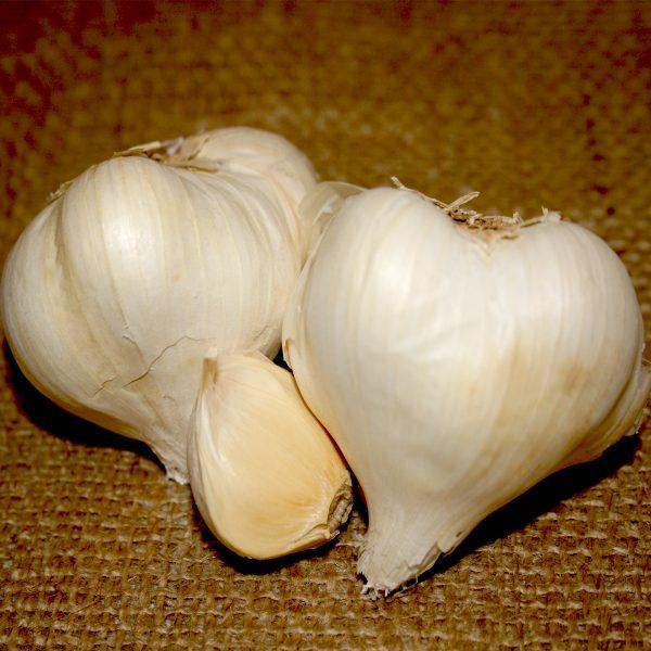 Organic Early Italian Purple Softneck Garlic Bulbs & Seed Garlic