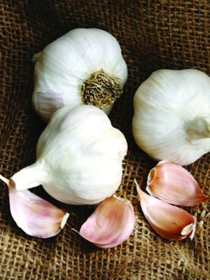 Organic Silver Rose Softneck Garlic Bulbs & Seed Garlic