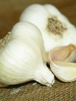 Organic Inchelium Red Softneck Garlic Bulbs & Seed Garlic