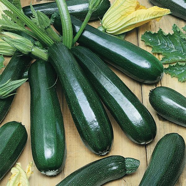 Résultats de recherche d'images pour « zucchini dark green »